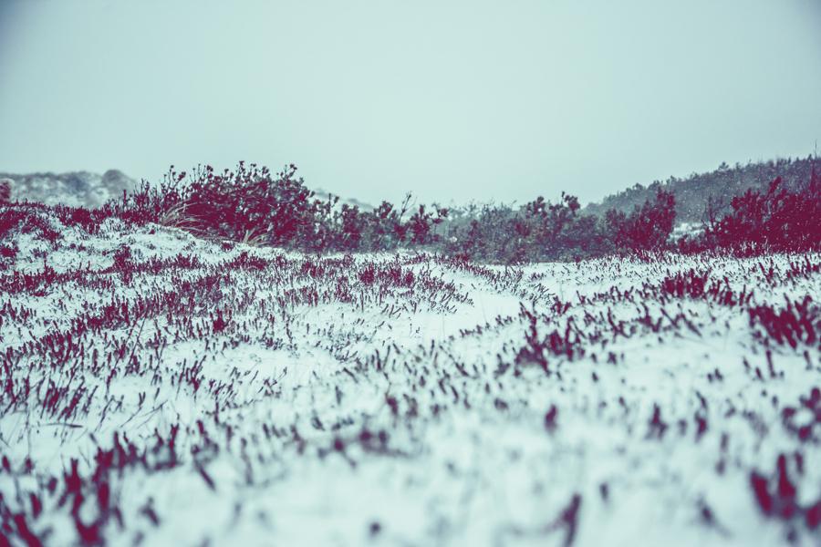 Vinterlandskap fotografering7