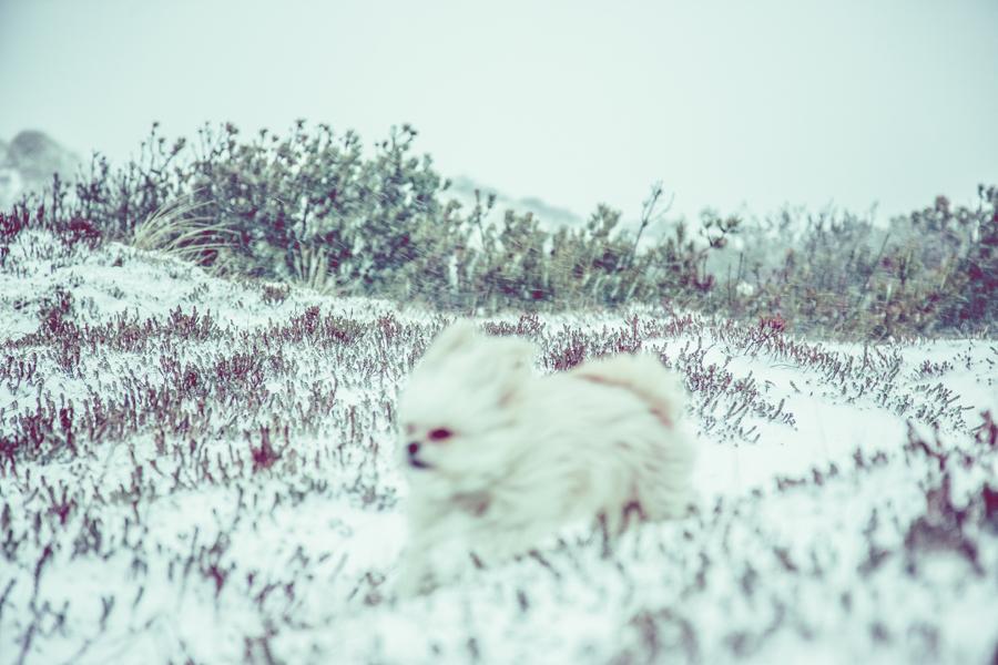 Vinterlandskap fotografering9
