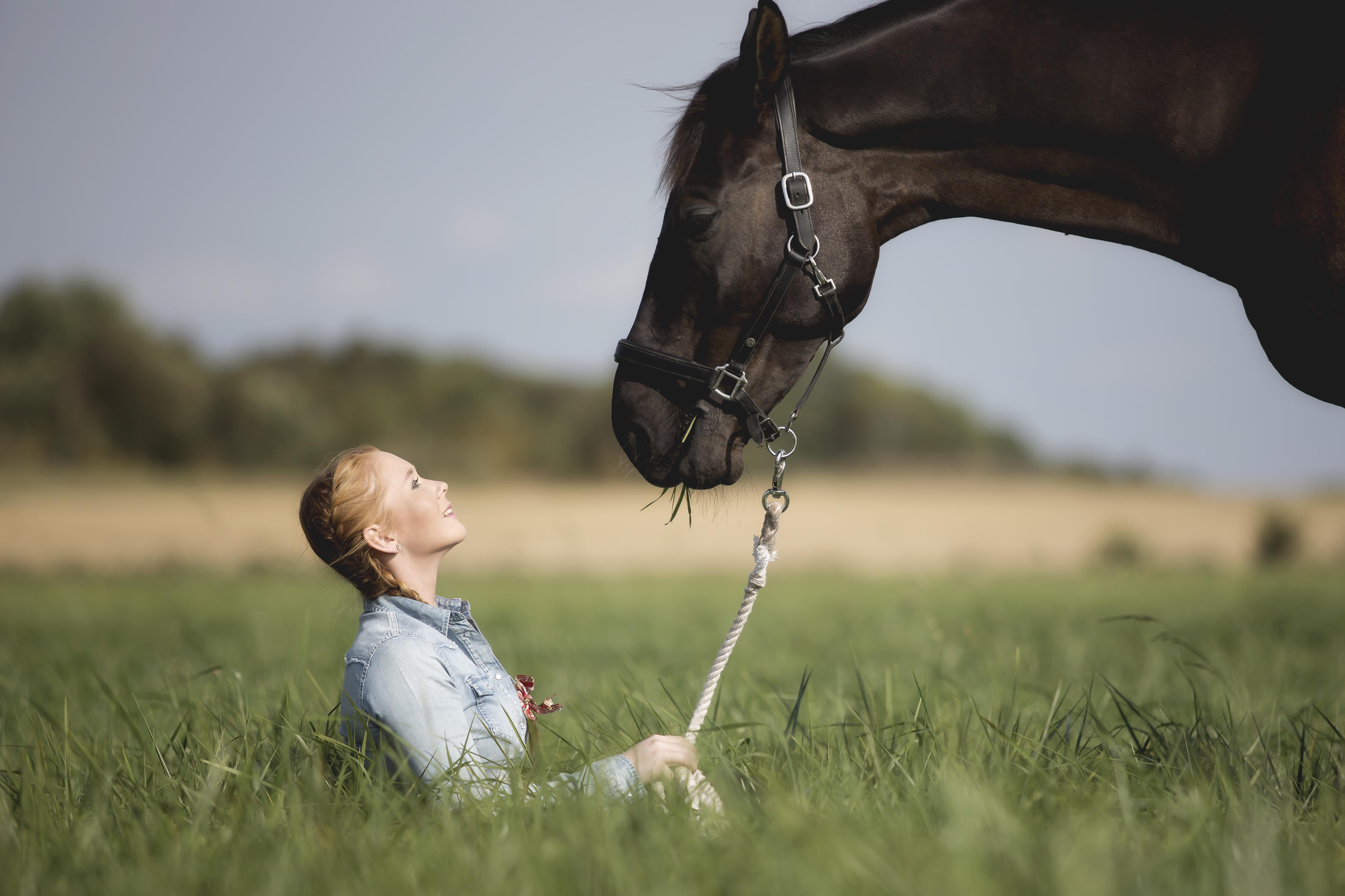 häst i frihet